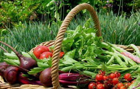 Margaret Roberts Herbal Centre - Fresh Vegetables for the Restaurant