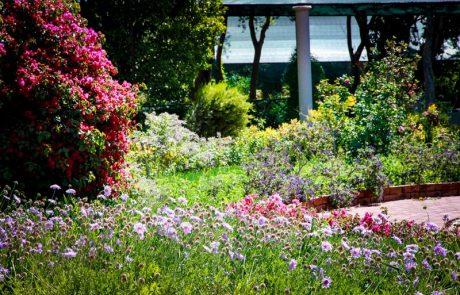 Margaret Roberts Herbal Centre - Herb Garden Flowers