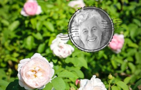 Margaret Roberts Herbal Centre - Rose Bush
