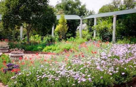 Margaret Roberts Herbal Centre - Herb Garden