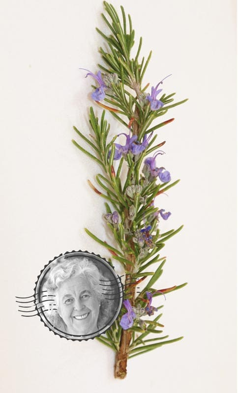 The Margaret Roberts Ginger-Rosemary