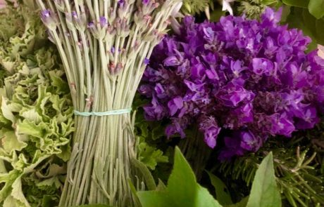 Margaret Roberts Herbal Centre - Fresh Botancials - Lavender Bunches (100 stems)